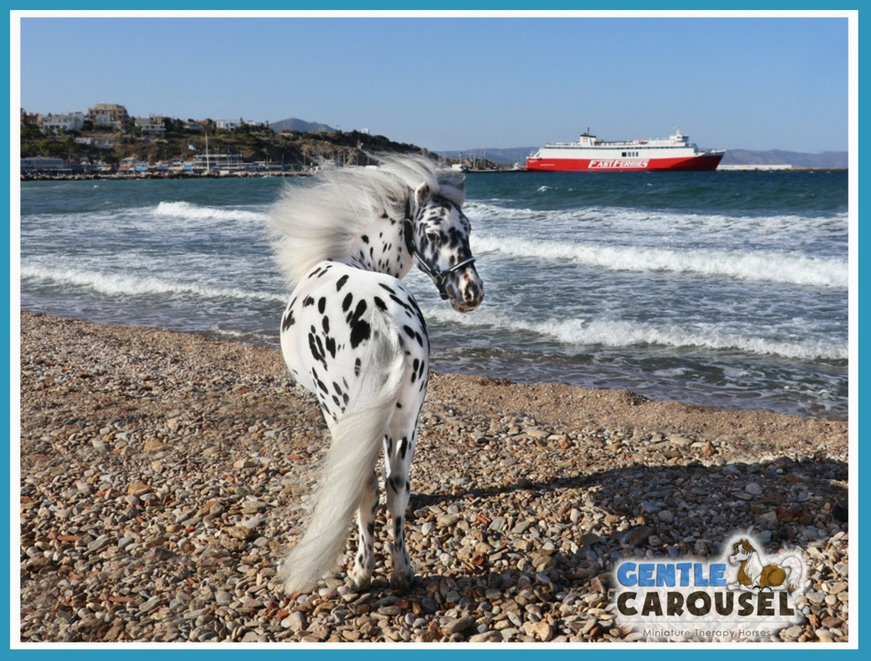 Gentle Carousel Horse Therapy Boat Greece Miniature Therapy Horses 871x661
