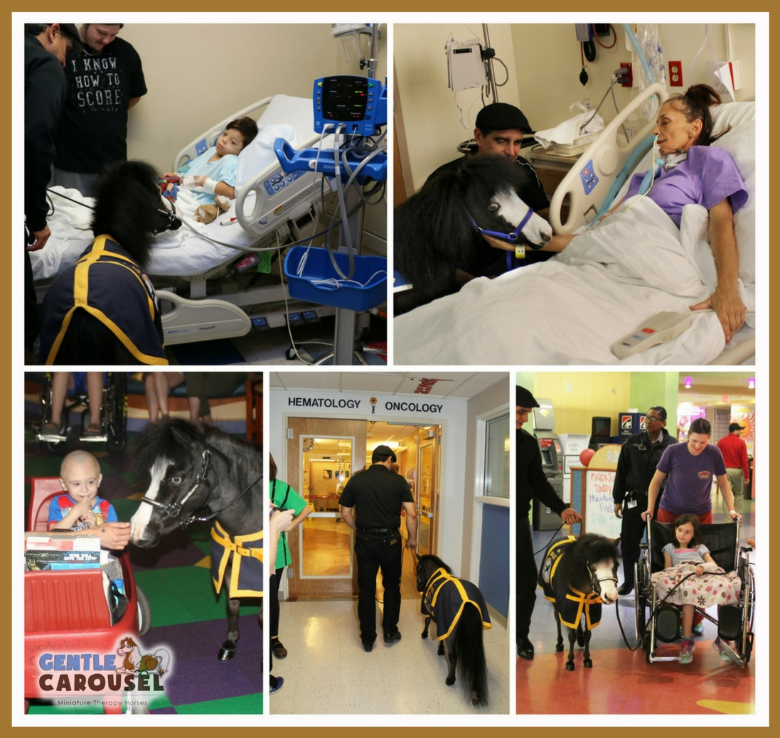 Gentle-Carousel Miniature Heroes Hospital Visits Therapy Horses News 1097x1038.jpg