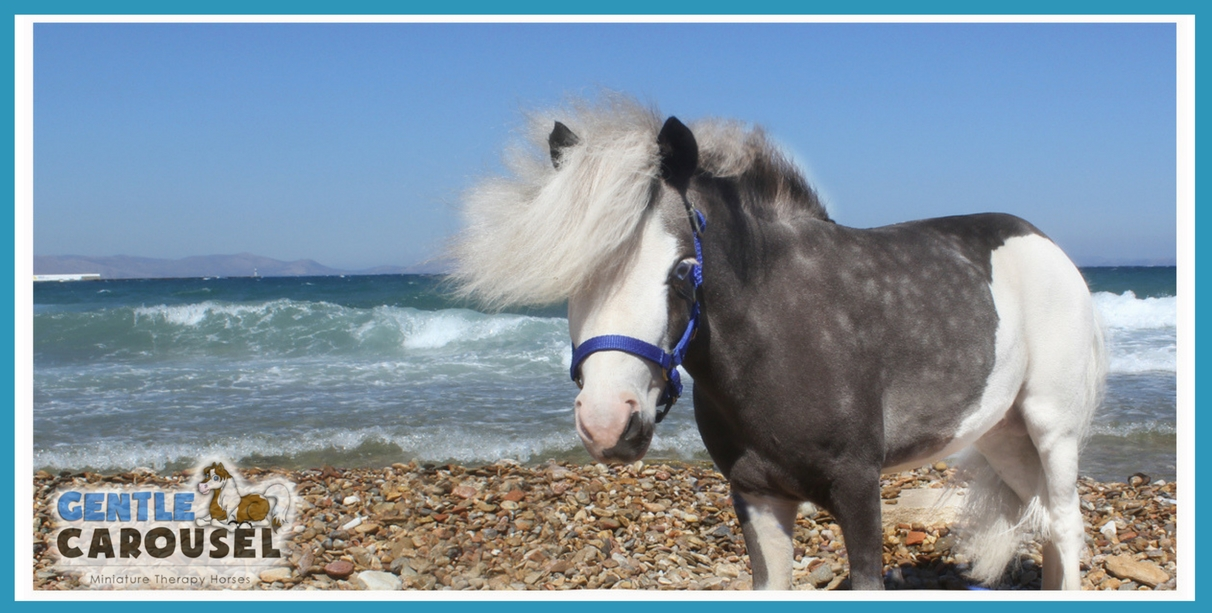 Homer Gentle Carousel Ocean Greece Miniature Therapy Horse 1212x613