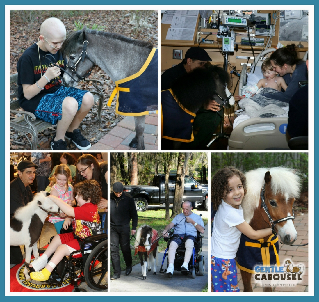 Little Heroes Animal Therapy Gentle Carousel Hospital Visits Therapy Horses News 1097x1038.jpg