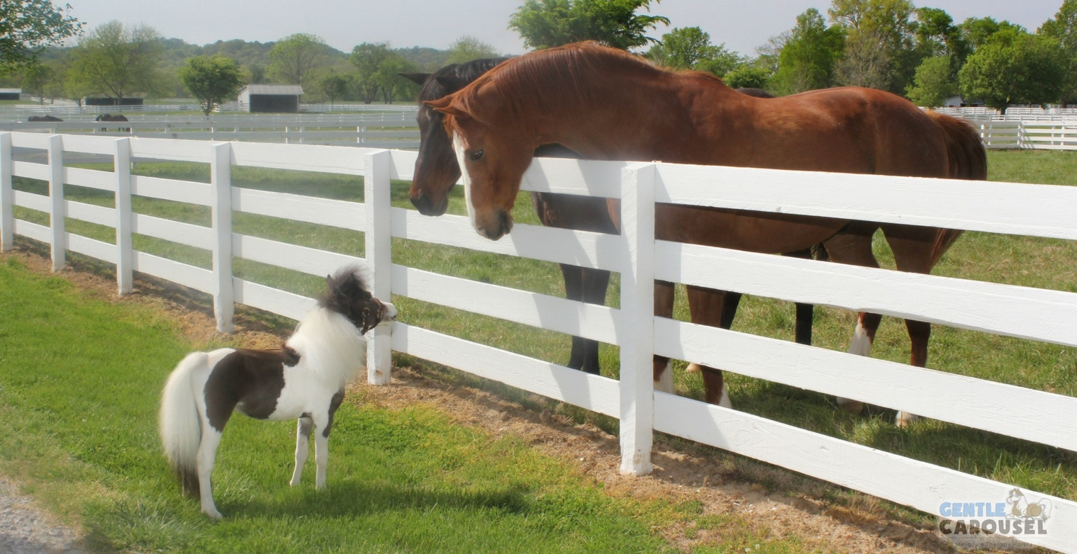 Miniature Therapy Horse Scout 1519x782