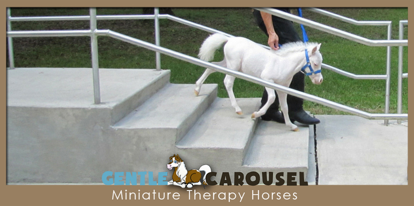 Prince training therapy animals gentle carousel hero horse 300x200