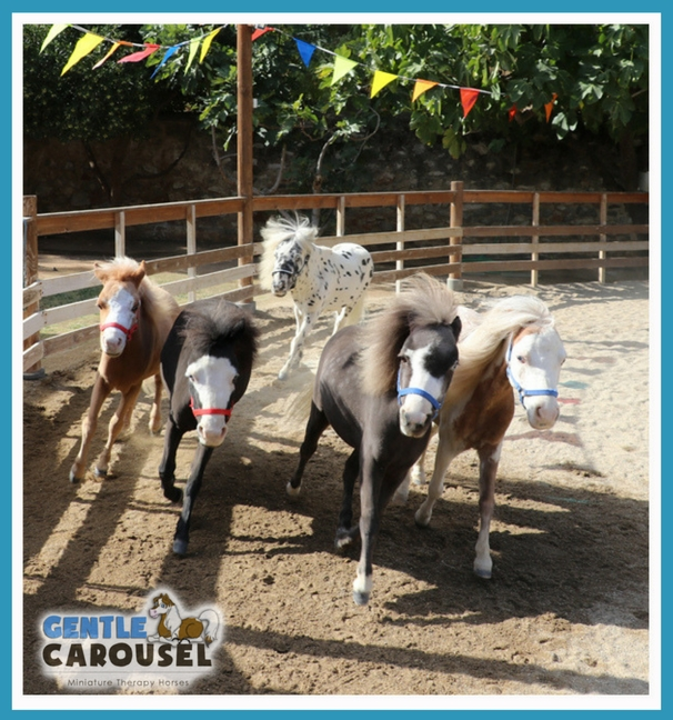 Therapy Mini Horse News Gentle Carousel Herd Greece 606x648