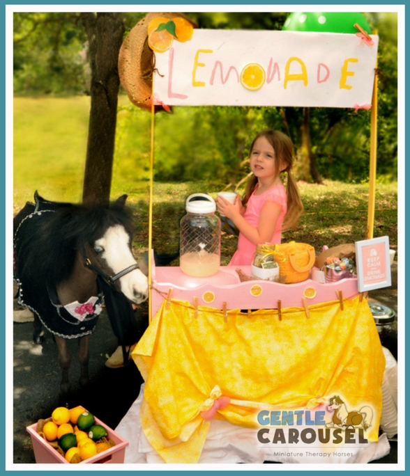 equine little hero horse magic therapy horses gentle carousel host host event 588x684