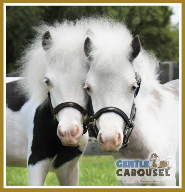 gentle carousel equine therapy mini horses anthem angel heroes 629x656