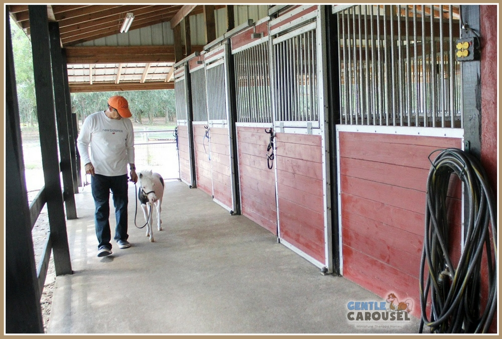 Anthem at Horse Therapy Barn Gentle Carousel 100x676