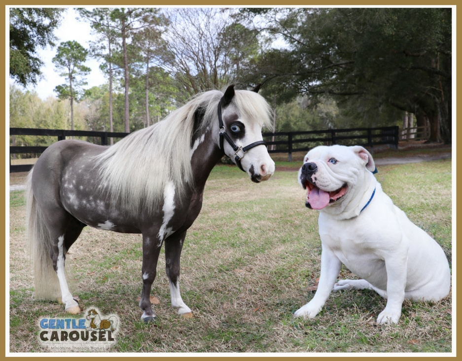 Horse News Miniature Therapy Horses Animal Therapy Farm 937x732