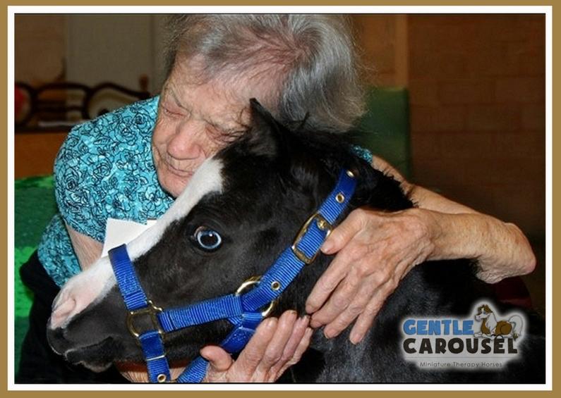 hero horse magic gentle carousel miniature therapy horses hug 795x565