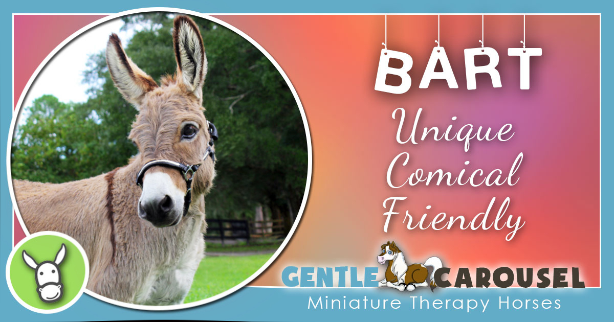 3 bart miniature equine horse therapy 1200x630
