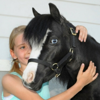 magic the therapy horse