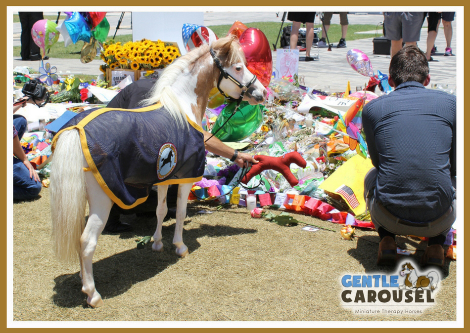 pulse nightclub  little hero orlando therapy horse pet therapy gentle carousel 950x674