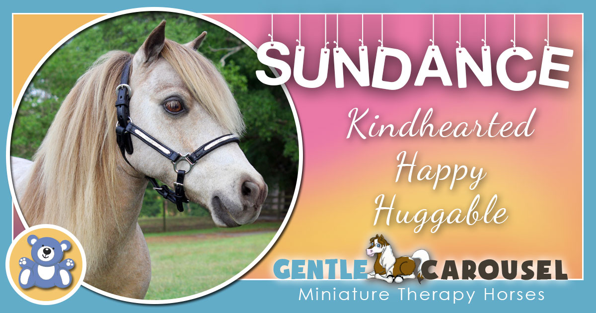 Sundance Miniature Horse - Equine Horse Therapy 1200x630