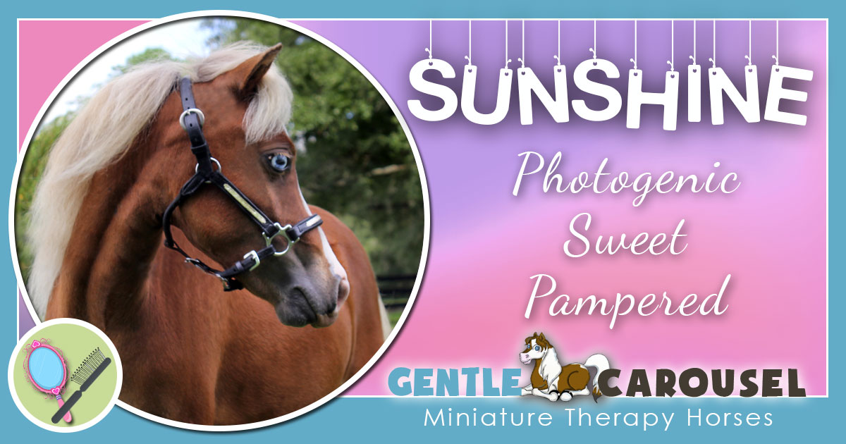 Sunshine Miniature Horse - Equine Horse Therapy 1200x630