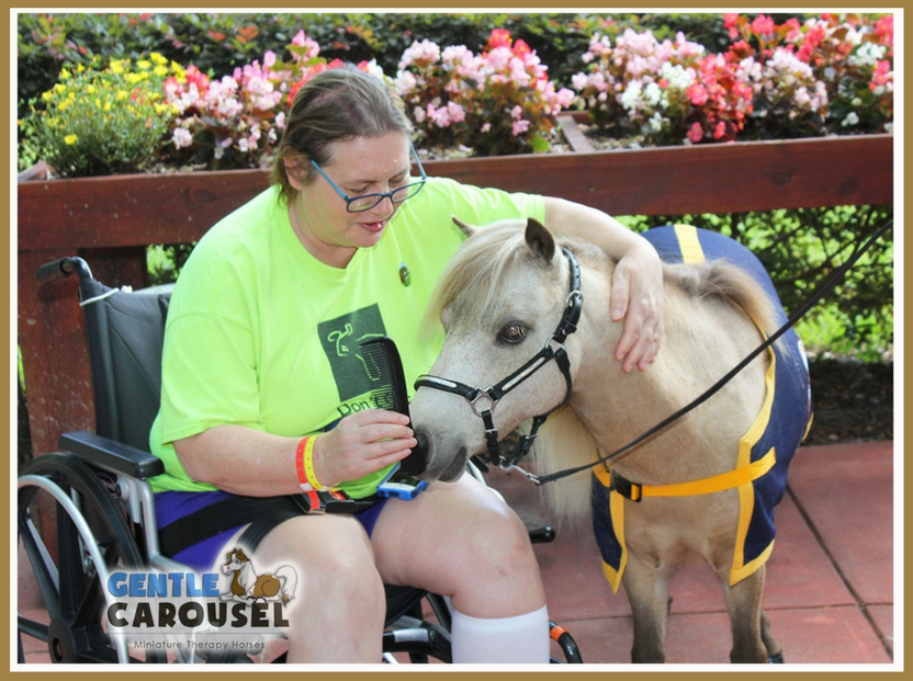 therapy horse sundance hospital hero gentle carousel animal 832x621