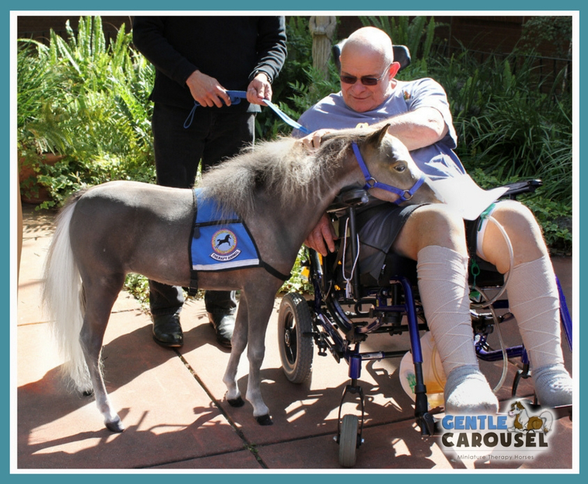 therapy horse toby hospital hero wheelchair gentle carousel 844x695