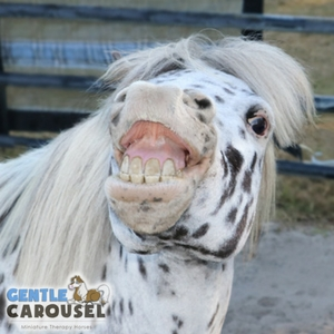 Horse Test Gentle Carousel Funny Personality 300x300