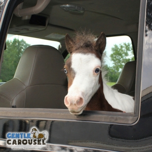 What Horse Are You Gentle Carousel Travel Car 300x300