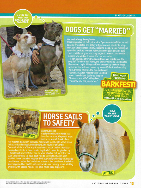 Horse News Miniature Therapy Horses National Geo 2 541x722