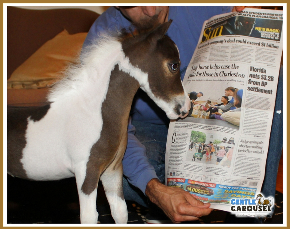 Miniature therapy horse scout newspaper front page 945x748