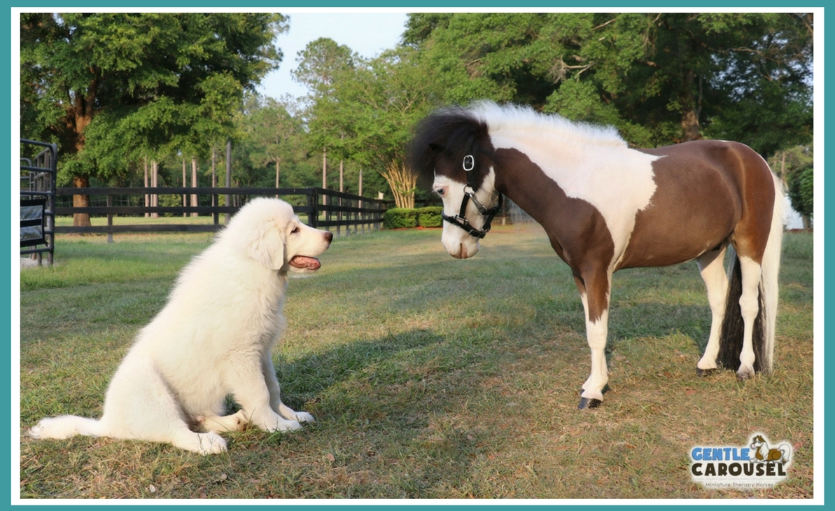 Therapy horse Scout with puppy Vigil on farm 1193x730