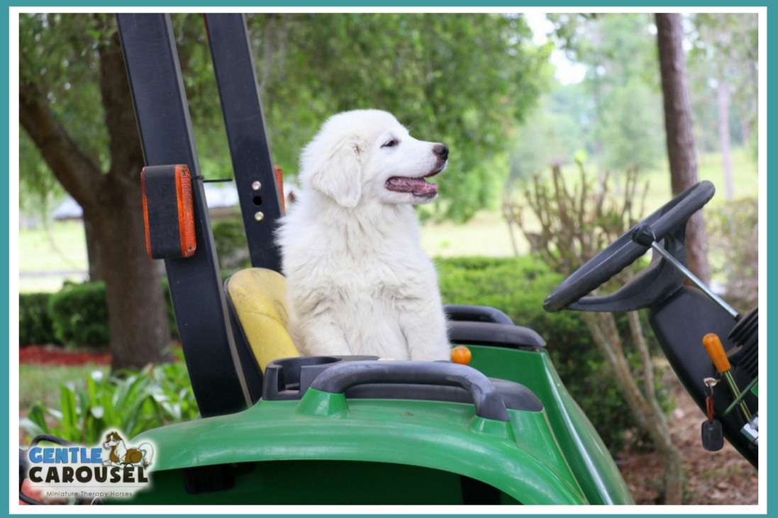 Vigil Tractor On Farm Livestock Guard Dog 1097x731