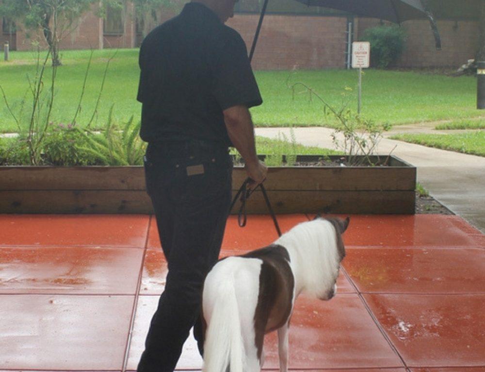 Rain On My Parade (Party)!