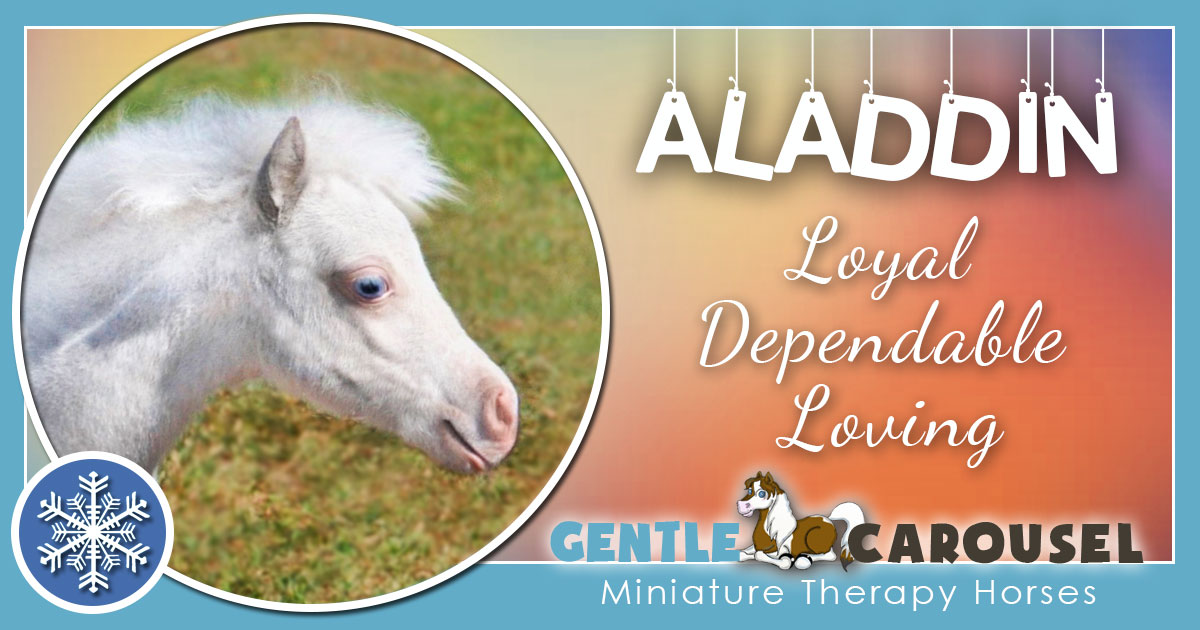 Aladdin Miniature Horse - Equine Horse Therapy 1200x630