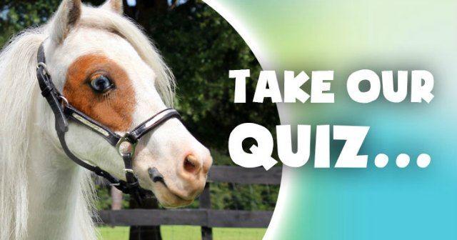 Horse Quiz Test