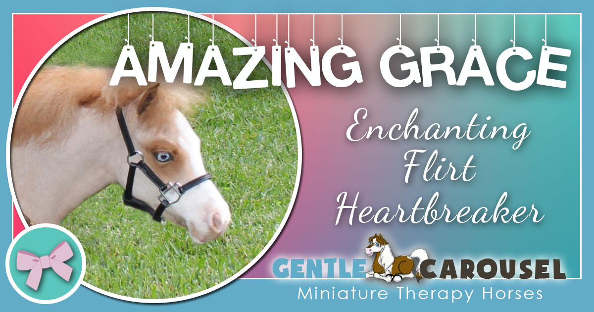 Amazing Grace Miniature Therapy Horse - Equine Therapy 1200x630