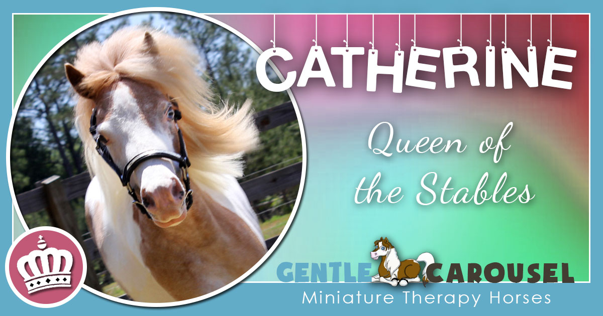 Catherine Miniature Horse - Equine Horse Therapy 1200x630