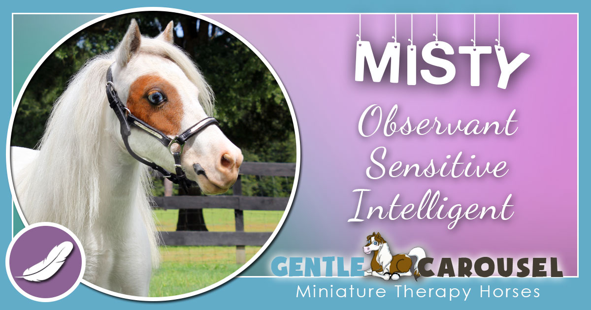 Misty Miniature Horse - Equine Horse Therapy 1200x630
