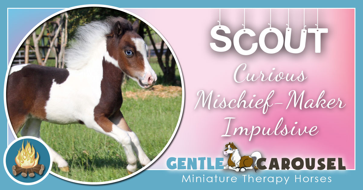 Scout Miniature Horse - Equine Horse Therapy 1200x630