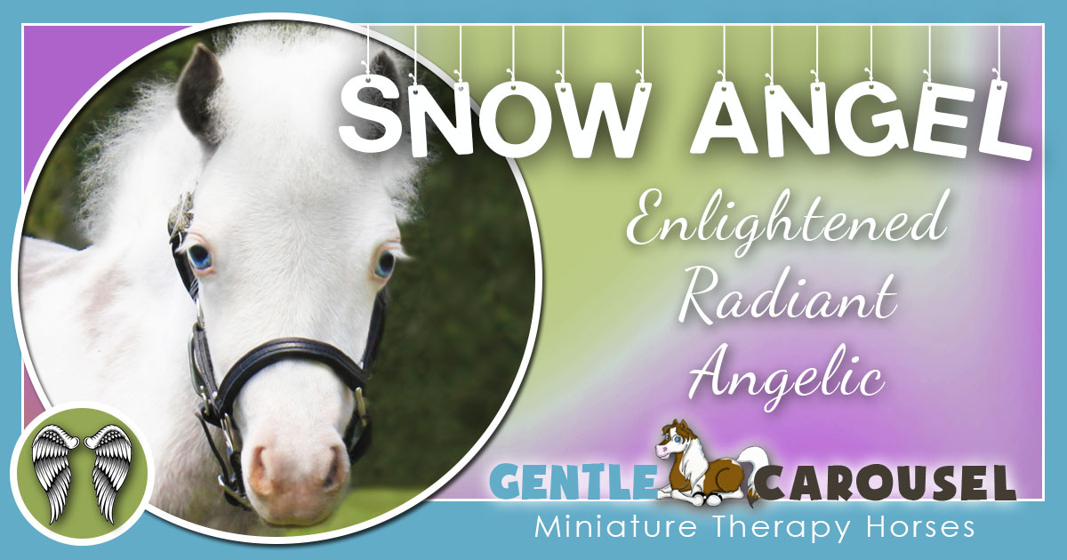 Snow Angel Miniature Horse - Equine Horse Therapy 1200x630