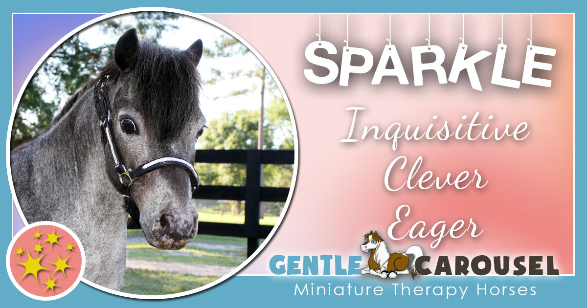Sparkle Miniature Horse - Equine Horse Therapy 1200x630