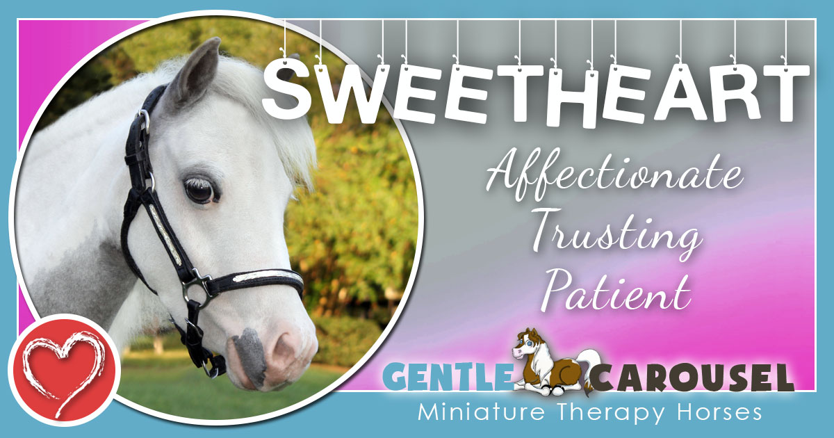 Sweetheart Miniature Horse - Equine Horse Therapy 1200x630