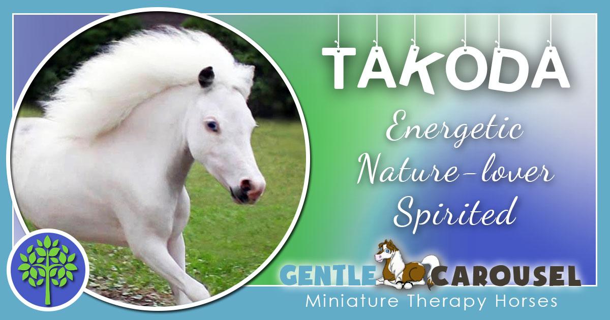 Takoda Miniature Horse - Equine Horse Therapy 1200x630