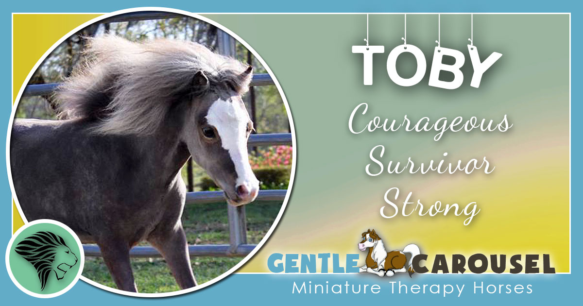 Toby Miniature Horse - Equine Horse Therapy 1200x630