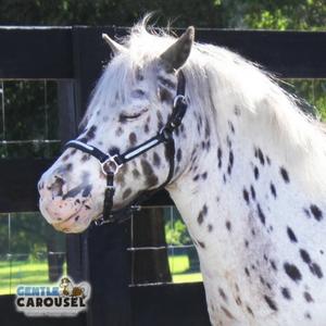 Horse Quiz Gentle Carousel Meditation 300x300