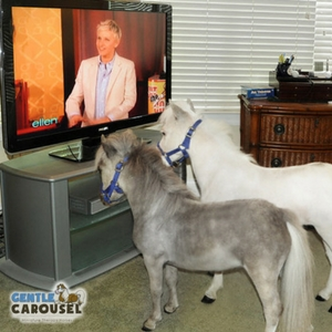 Horse Quiz Gentle Carousel Watching Television 300x300