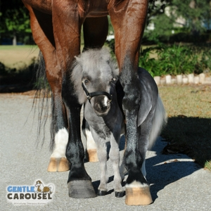 Horse Test Gentle Carousel Best Friends 300x300