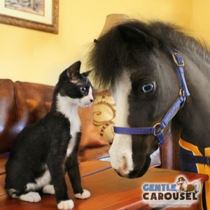 Horse Quiz Gentle Carousel Cat Lover 300x300