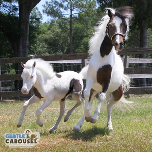 Horse Test Gentle Carousel Your Family 300x300