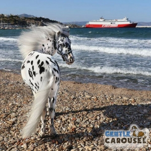 What Horse Are You Gentle Carousel Travel Boat 300x300