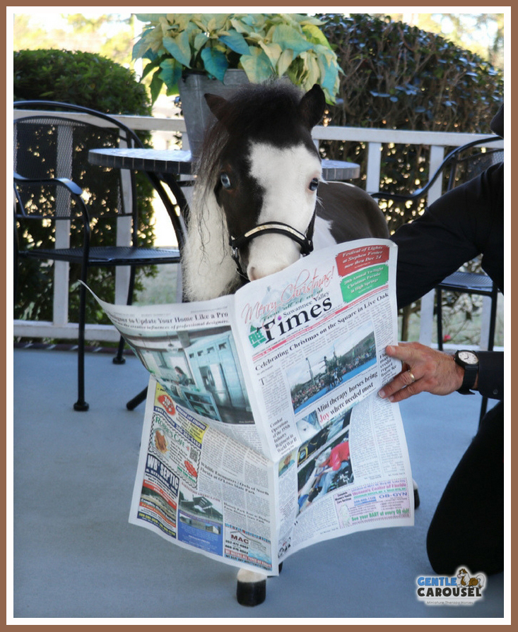 Therapy horse Scout reading Blog Gentle Carousel 694x856