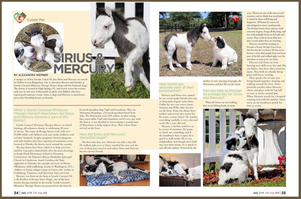 Gentle Carousel Therapy Horse Mercury Media11008x669