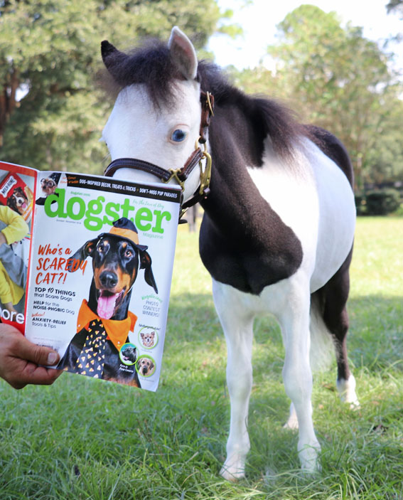 Gentle Carousel Therapy Horse-Mercury in Dogster media 561x703.jpg