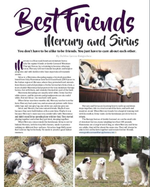 Mercury Sirius Gentle Carousel-Media Miniature Therapy Horses 515x641
